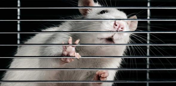 Мы все — лабораторные крысы, участвующие в крупнейшем монетарном эксперименте за всю историю человечества